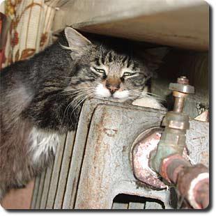 http://bering.narod.ru/foto/cat_cold.jpg